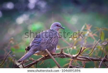 "Pigeons and doves constitute the bird family Columbidae and the order Columbiformes, which includes about 42 genera and 310 species. The related word ""columbine"" refers to pigeons and doves."