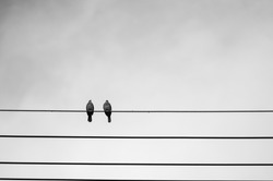 Pigeons couple on electric cable with cloudy background, black and white photo.