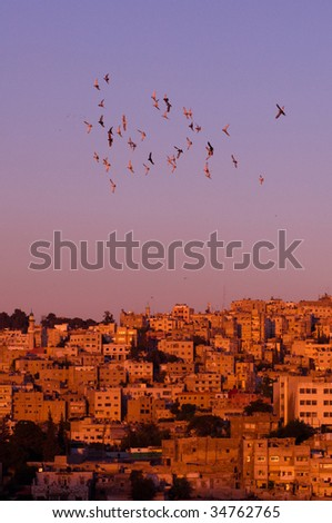 Pigeons fly over Amman skyline at sunset.