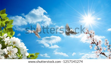 pigeons flying among the flowers blooming in sunny sky and spring in background