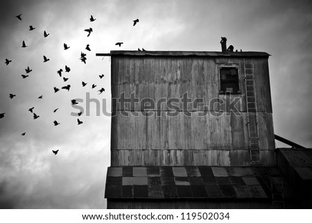 Pigeons Flying Away From an Old Grain Mill