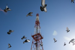 pigeons Flying in the sky against the background of Tower 5g