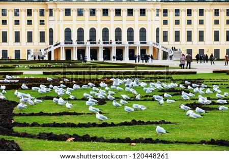 Pigeons in front of Schoenbrunn Castle, Wien, Europe