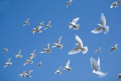 Pigeons in the sky