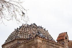 pigeons on a dome, tile roof
