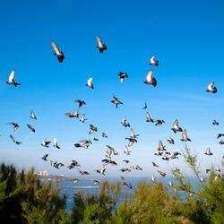 pigeons on blue sky