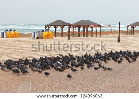 Pigeons on empty beach under the winter storm. Tel Aviv, Israel
