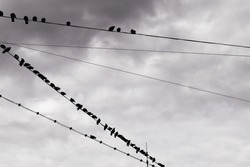 Pigeons on power lines in a cold day with clouds