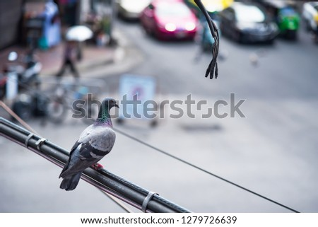 Pigeons on the power cord blurred background of traffic in Bangkok, Thailand