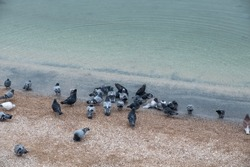 Pigeons on the sandy beach of the Azov Sea.