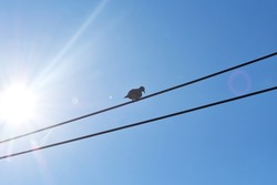Pigeons on the wires at noon are perfect for presentations.