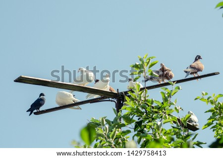 pigeons perched on a perch