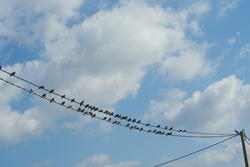 Pigeons perched on high voltage  wire and with a sky with white clouds