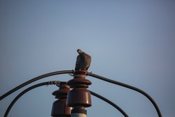 Pigeons sitting on the electric high-rise wire. Birds on the power line. Calm pigeon on electricity wire.
