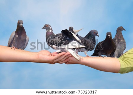 Pigeons sitting on the hands
