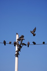 pigeons standing on wire with peace