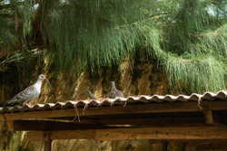 pigeons taking shade on a rooftop underneath a tree