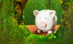 piggy bank in green moss forest hole, green bacground. saving money is investment concept.