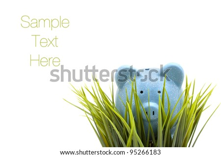 Piggy coin bank hiding in the grass, isolated on white background, copy space
