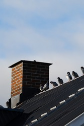 Pigions sitting on a rooftop by a chimney