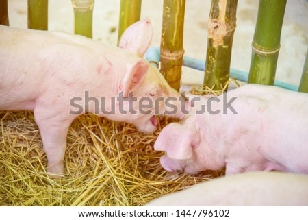 Piglets raised in pig farms.  Many piglets in the stall. #1447796102