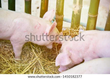 Piglets raised in pig farms.  Many piglets in the stall. #1450182377