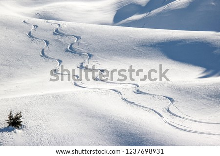 Pila, Aosta, Italian Alps, snowy scenery: Twin snowboard trails carved in fresh snow and lonely bush after a snowfall. Christmas background. Photos with Snow, free ride ski, freeride