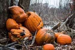 Pile of abandoned rotting pumpkins left to rot when halloween is over