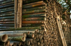 Pile of bamboo pole. Stack of round timber logs. Large batch of wooden logs for industrial scale or manufacturing. Warehouse of material for furniture factory. Art of bamboo abstract background.