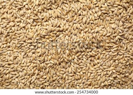 Pile of barley malt grain forming a uniform background texture