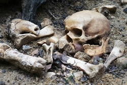 Pile of  bones and a  broken skull on the ground with some soil on them / Still Life image and select focus