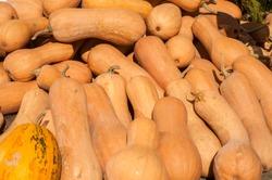 Pile of butternut Matilda pumpkins closeup as background