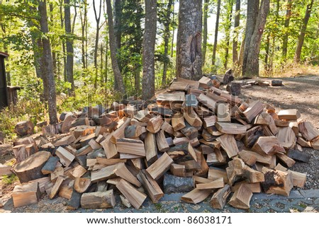 Pile of chopped wood in the forest