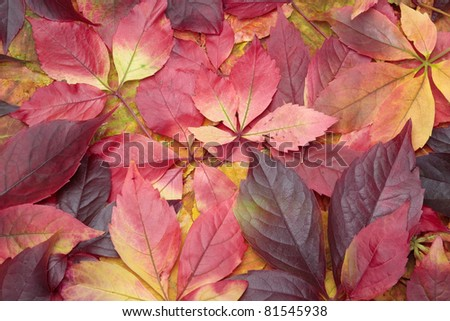 Pile of colorful autumn leaves background