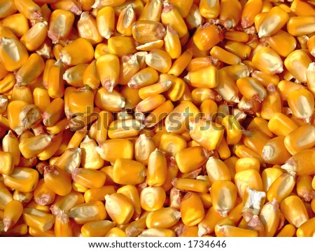 Pile of corn kernels from a corn sheller