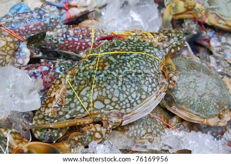 Pile of crabs fresh caught In the Market. closeup Useful for design-works.