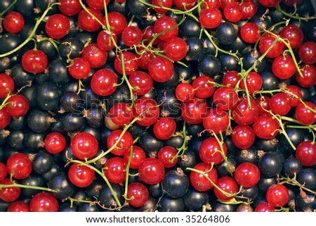 Pile of currants - stock photo