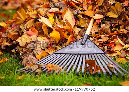 Pile of fall leaves with fan rake on lawn Stock photo ©
