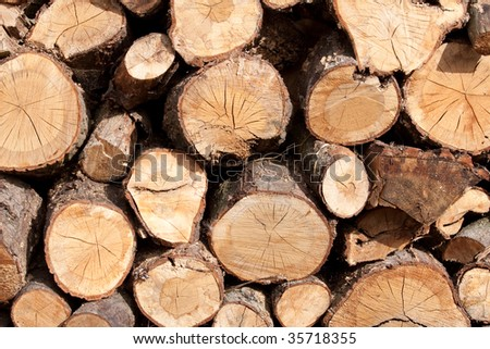 Pile of fire wood logs