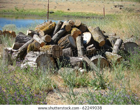 pile of firewood cut from tree stumps