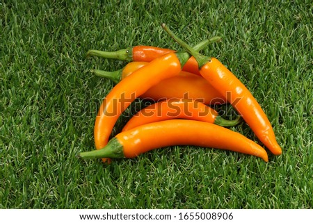 Pile of fresh and organic hot Chili pepper,  Orange and green cayenne chili isolated on grass field. Popular hot and spicy ingredient in Asia.