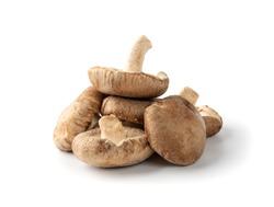 Pile of Fresh shiitake mushrooms isolated on white background. Raw shitake, healthy organic asian fungi
