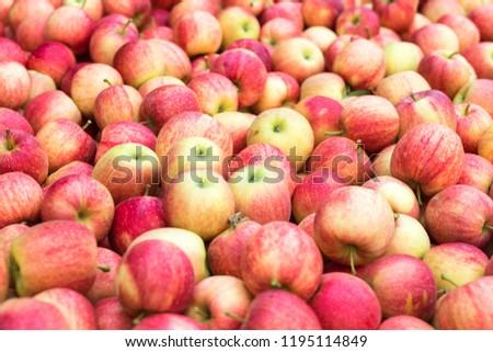 Pile of freshly harvested apples. Red organic apple fruit. #1195114849