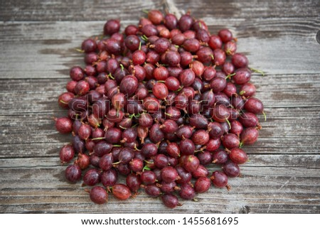 Pile of freshly riped red gooseberries on old wooden table in background, healthy summer organic fruits of beeries, full of vitamins and antioxidants ideal as light vegan snack or to make homemade jam #1455681695