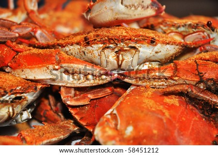 Pile of freshly steamed Maryland Blue Crabs with focus on one crab face.