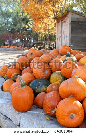 Pile of gourds and pumpkins displayed on the farm for autumn holidays