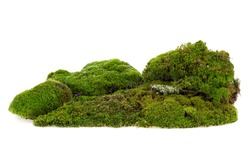 Pile of green moss isolated on a white background. Mossy hill.