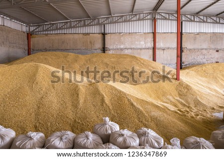 Pile of heaps of wheat grains and sacks at mill storage or grain elevator. #1236347869