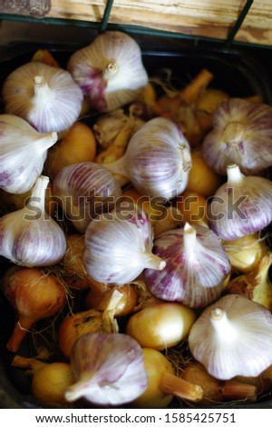 Pile of homegrown garlic autumn