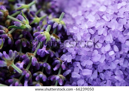pile of lavender bath salt with fresh lavender flowers - beauty treatment